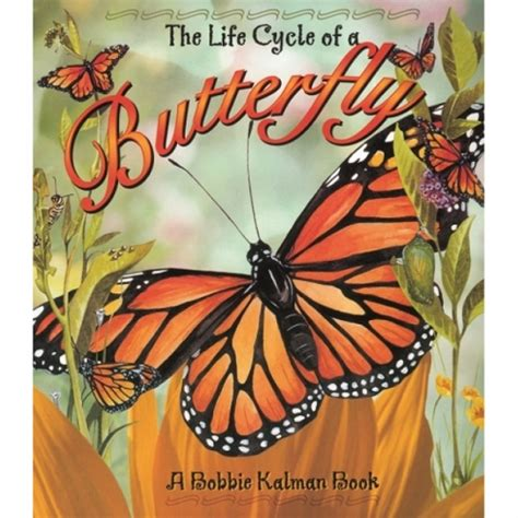 rocks butterflies books the cycle of a butterfly book butterfly cycle book