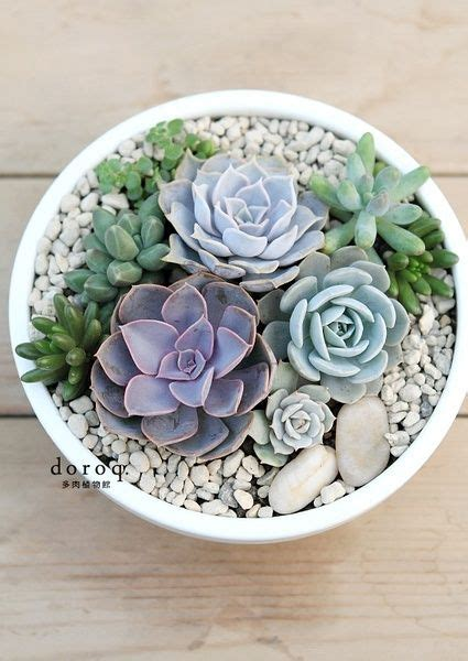 Indoor Succulent Planter by 25 Unique Indoor Succulents Ideas On