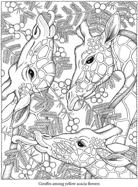 coloring book by nature for adults relaxation don juan s coloring books books free downloadable coloring to relax your brain the