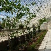serra da giardino usata serre orto ortaggi caratteristiche delle serre per orto