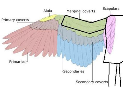 How To Make Paper Wings - how to make size paper wings patience