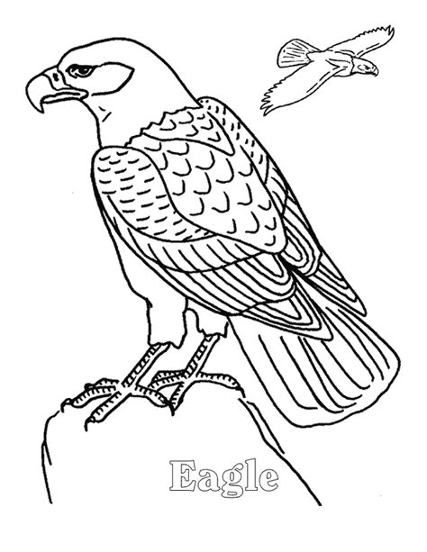 eagle coloring page eagle coloring page coloring home