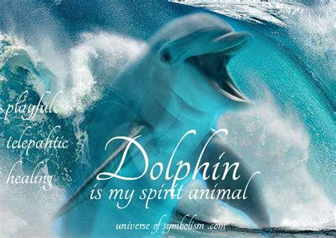 dolphin symbolism dolphin meaning dolphin signs