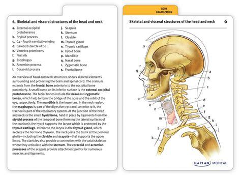 printable flash cards anatomy and physiology anatomy muscle flashcards human anatomy diagram