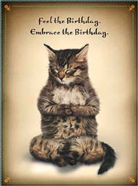 happy birthday yoga cat cat yoga meditation