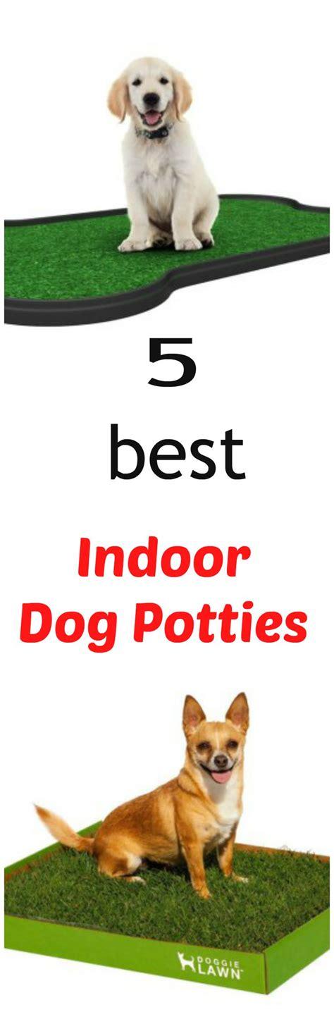 indoor dog bathroom solutions best 25 dog potty ideas on pinterest dog run side yard