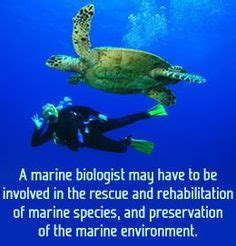 what s it like to be a marine biologist to be biology and what is