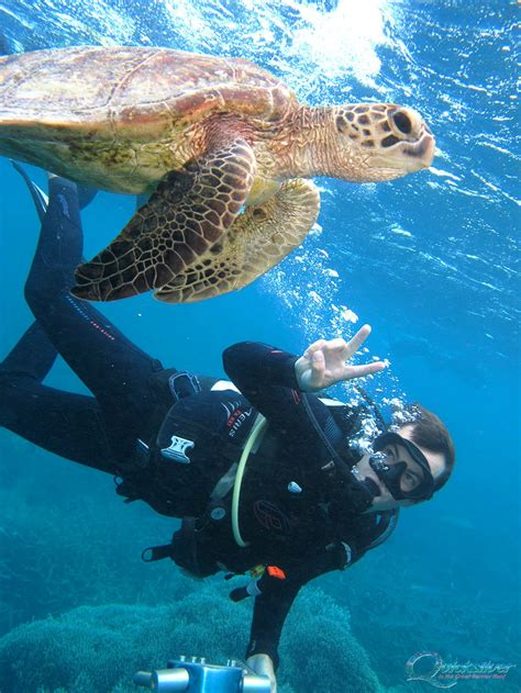 great barrier reef dive diving on the great barrier reef scuba dive cairns and