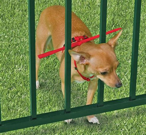 how to keep dog in yard this dog harness keeps your dog from escaping through your