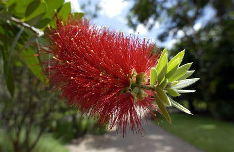 fiori australiani funzionano i fiori australiani cosa sono e come agiscono lifegate