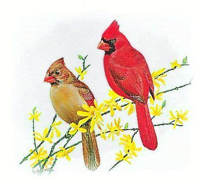 backyard birds clipart clipground