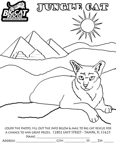 coloring pictures of big cats big cat rescues coloring pages big cat coloring page