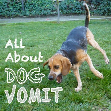 All About Dog Vomit: Why Is My Dog Throwing Up?   PetHelpful