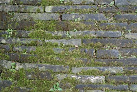 fotos gratis cesped rock suelo textura pared musgo
