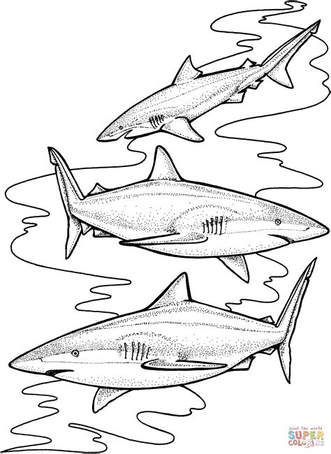sand shark coloring page three tiger sharks coloring online