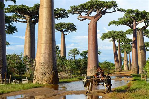 16 of the most magnificent trees in the world bored panda 16 of the most magnificent trees in the world ready
