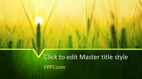 barley powerpoint template  powerpoint templates