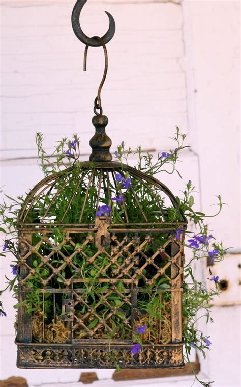 Bird Cage Planters by 17 Best Images About Birdcage Planters On