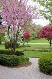 25 best dwarf trees ideas on pinterest dwarf flowering