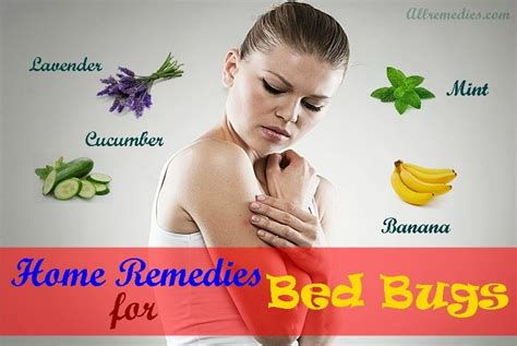 natural home remedies  bed bugs bites