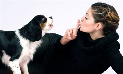 why your dog barks vet tips tips on how to stop barking dogs sit not bark