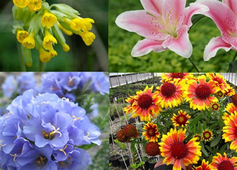 7 Easy Plants To Grow by 7 Alluring And Colorful Flowers That Are Easy To Grow For