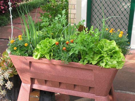 Top 10 Vegetables To Grow In Pots Gardendrum Vegetable Garden In Pots