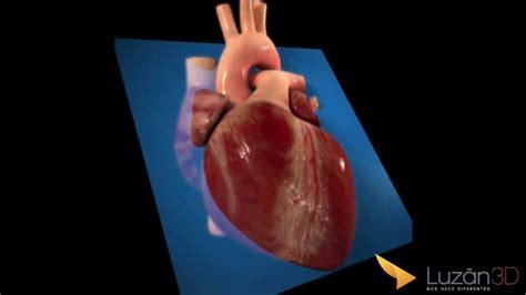 el corazn de una 1520265506 el coraz 243 n virtual youtube