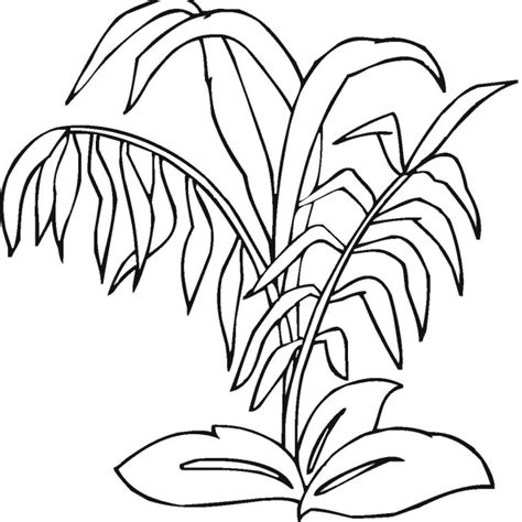 Free Plants Coloring Pages Plants Coloring Page