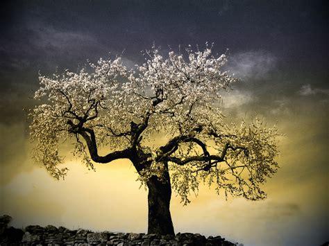 magic tree magic tree inmacor flickr