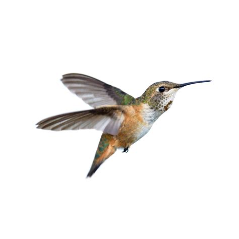 hummingbirds bird house habitat boise idaho 208 375 8051