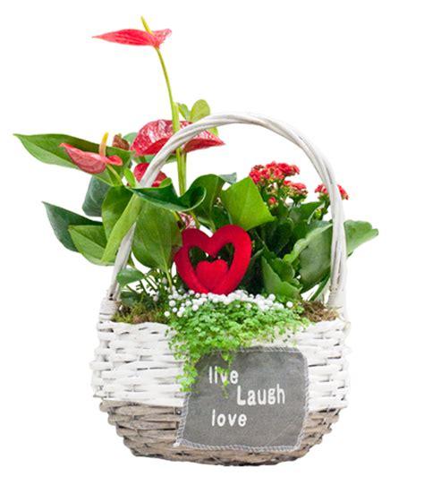plantas florales de interior plantas florales de interior plantas para eventos