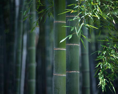bambou habitat create the eco luxury homes