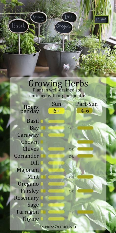 how to grow a herb garden 23 diagrams that make gardening so much easier