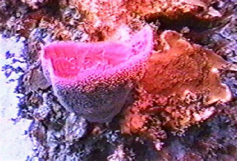 Pink Vase Sponge by Pink Vase Sponge
