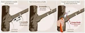 comment couper les branches