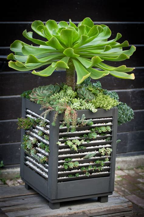 succulant planter sedum planter made from window shutters fleurs plantes
