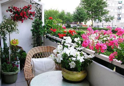 Flowers For Balcony Garden Best Flowers For Balcony Garden