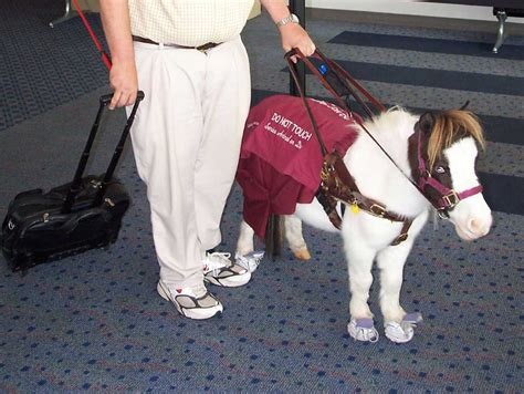 comfort dogs on airplanes it won t be as easy as it used to be to bring comfort