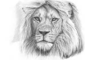 Go back gt gallery for gt easy pencil drawings of lions