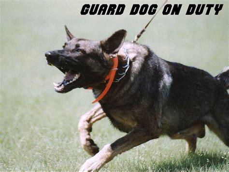 puppy guarding guard junglekey fr image