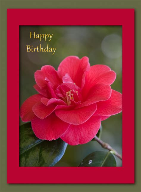 Happy Birthday Cards With Roses Red Rose Birthday Card Free Stock Photo Public Domain