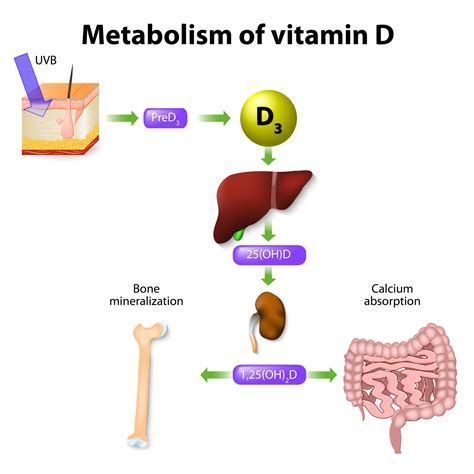 vitamin d le international association for medicine science