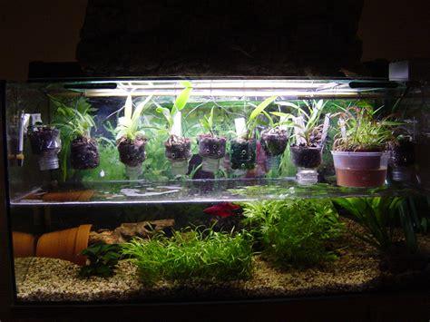 home fish decor petco acetabularia betta aquarium plant