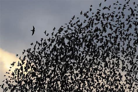 regionale europea la spezia caccia allo storno m5s attacca mai quot se ne frega tar