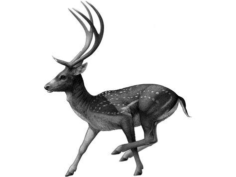 imagenes venados navideños descubren los f 243 siles de una nueva especie de ciervo gigante