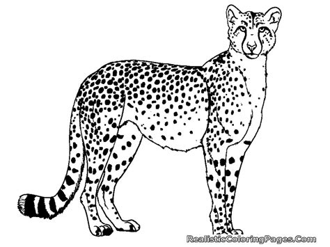 Realistic Cheetah Coloring Pages free coloring pages of cheetah realistic coloring pages