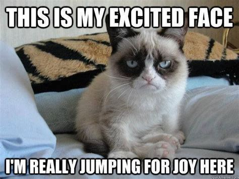 Joy Meme - grumpy cat the girls love this cat pinterest