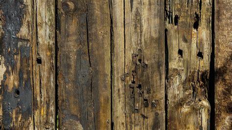 gambar pohon cabang menanam tekstur bagasi