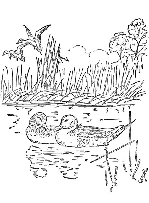 preschool nature coloring pages get this free preschool nature coloring pages to print p1ivq
